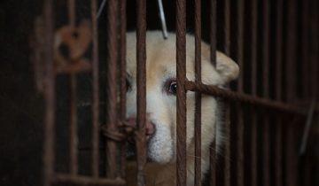 Собачек и кошечек кушать нельзя — в Тайване впервые в Азии меняют древние правила