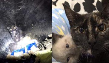 Спасение кошки с новорожденными котятами из глубокой трубы превратилось в целую эпопею