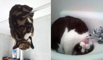17 фотодоказательств, что кошки — инопланетяне, позабывшие о маскировке