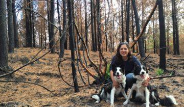 Чилийское ноу-хау — собаки играючись засевают целые леса