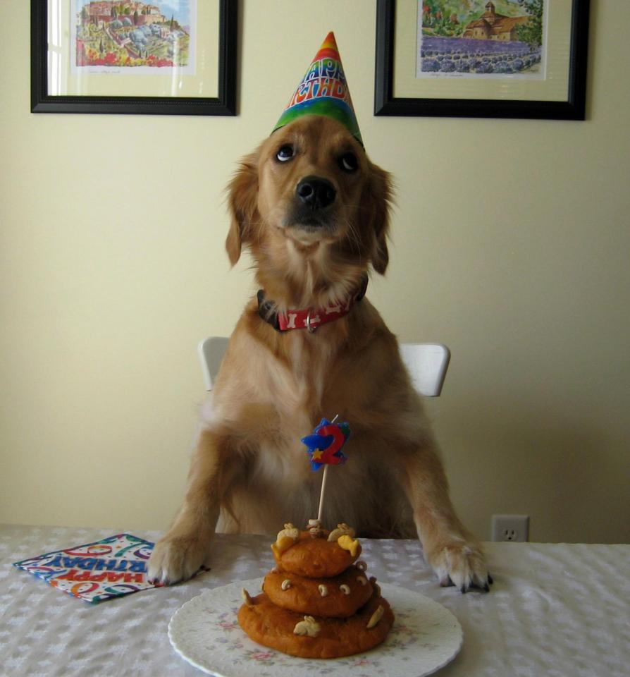 Открытки с днем рождения собака с тортом