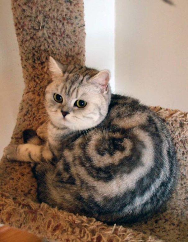 17 кошек с самым необычным окрасом шерсти. Пикассо отдыхает!