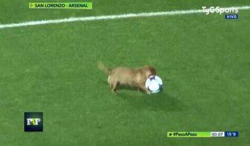 Неугомонная собачка отобрала мячик у футболистов и почти сорвала матч к потехе болельщиков