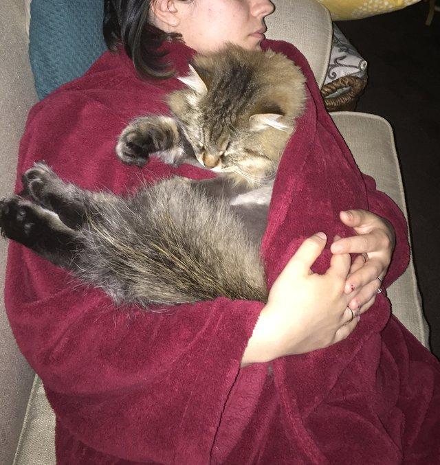Когда неласковый котенок вдруг сам свернулся клубочком на коленях хозяйки, та поняла — грядет что-то важное