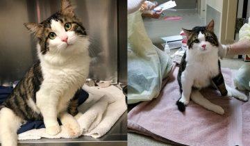 Парализованную кошку отправили на другой конец света ради призрачного шанса вылечить её
