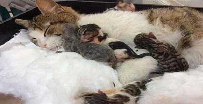 Беременная кошка не могла родить и в отчаянии пришла за помощью к людям.