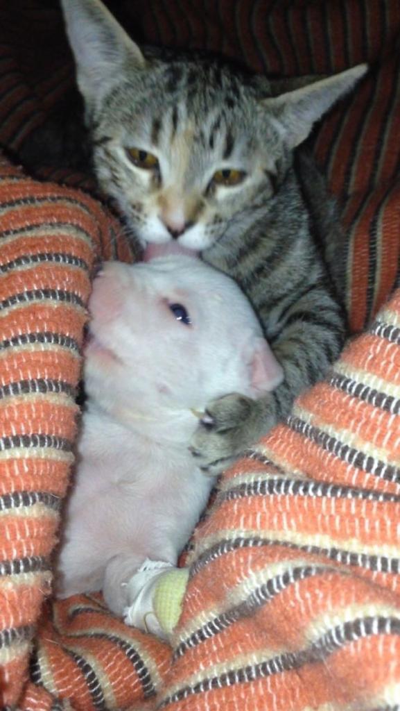 Щенка, которого искалечила его мать, спас дружный коллектив кошек и собак .