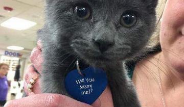 Она думала, что ей просто подарили симпатичного котенка, но потом заметила кое-что