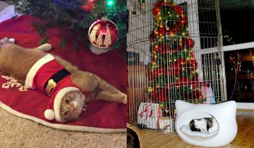 Народная мудрость: как защитить новогоднюю елку от посягательств домашних питомцев