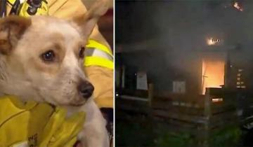 Пожарные не могли понять, почему маленькая собачка все еще не покинула горящий дом