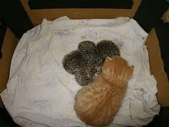 Картинки по запросу У Сони есть только один котенок