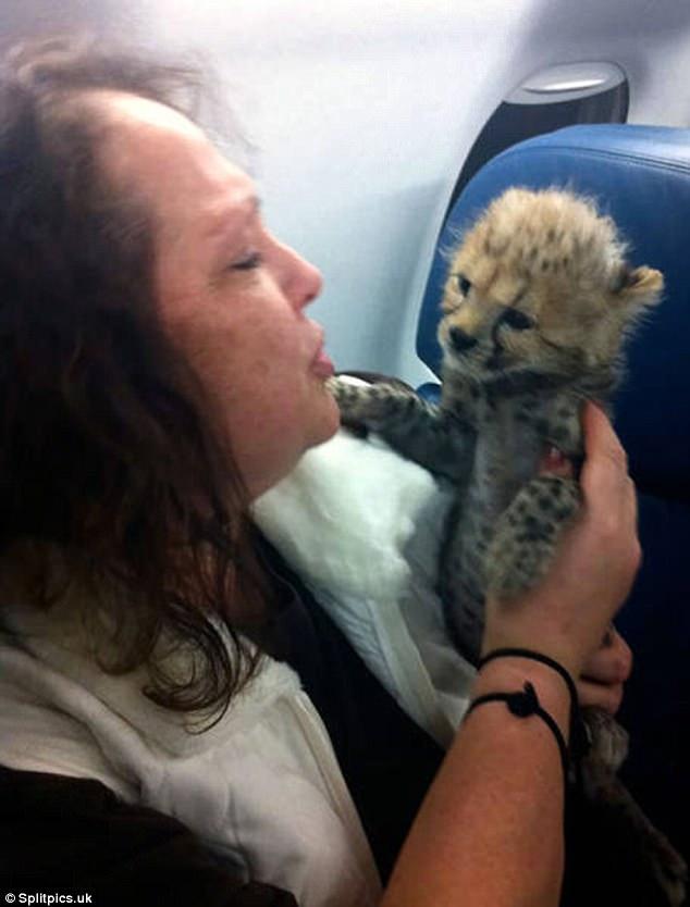 Im Flugzeug kann man jedes Tier treffen!