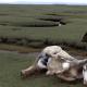 Эмоциональный жеребенок привел спасателей на помощь к лошади, попавшей в беду