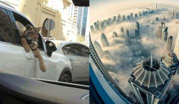 Дубай продолжает удивлять: диковинки, которые давно стали повседневностью