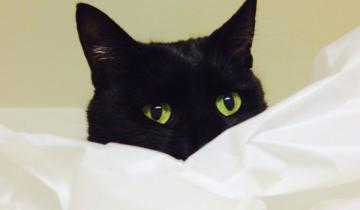 В отчаянии кошка заорала дурниной прямо в микрофон электронной няни