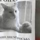 Жутковатая иллюзия напугала соцсети: люди просят не искать этого страшного кота