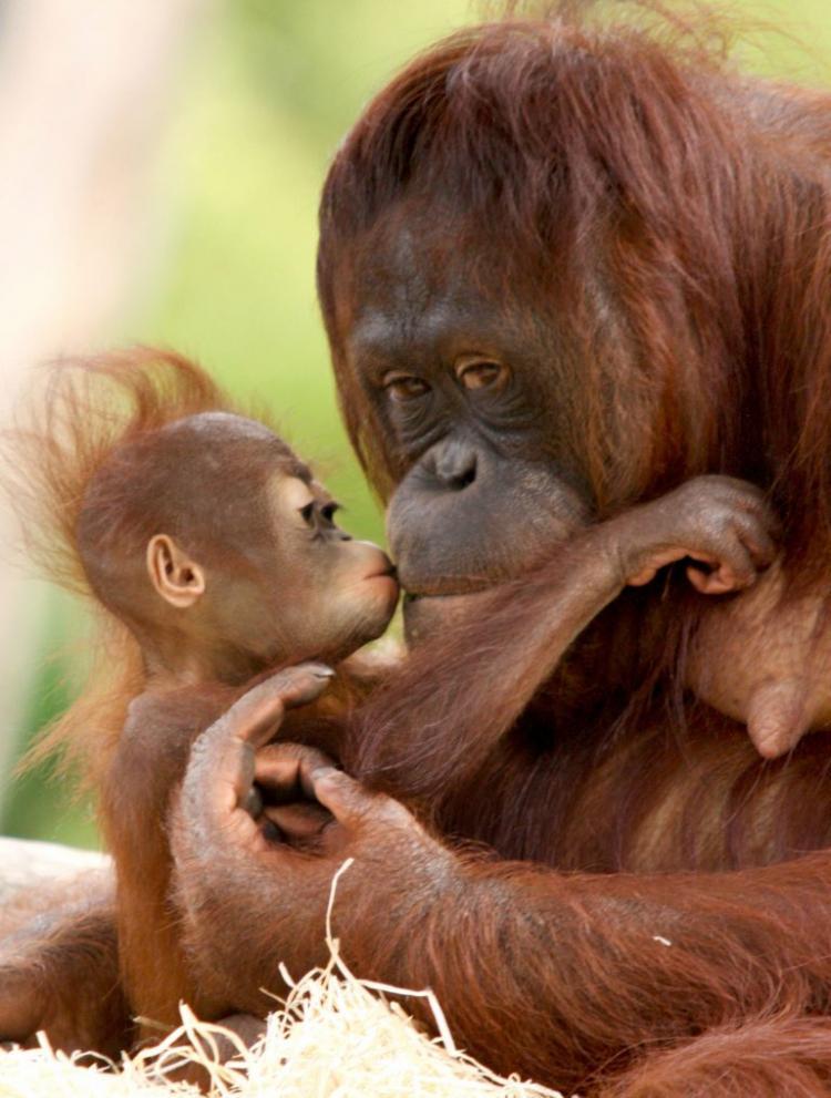Смешные фото и картинки мам с детенышами