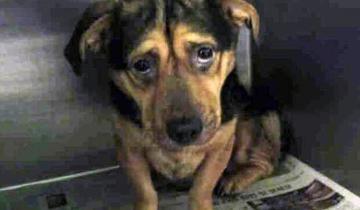Самая грустная собака Калифорнии обрела новую семью вопреки предубеждениям