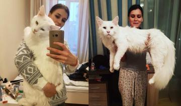Гигантский кот с гетерохромией больше всего обожает сидеть на руках миниатюрной хозяйки