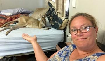 Это Австралия, дамы: валлаби залез в кровать, чтобы как следует выспаться на глазах у хозяйки