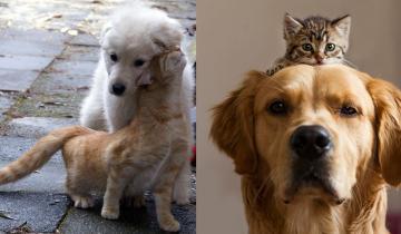 Слышишь выражение «как кошка с собакой» и сразу представляешь это