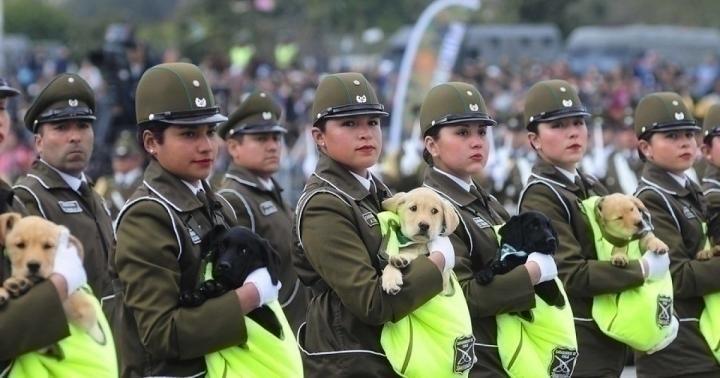 Главным украшением военного парада в Чили стали… щенки в мешочках!