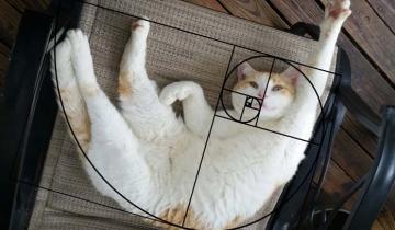 Еще одно доказательство уникальности кошек: они олицетворяют золотое сечение!