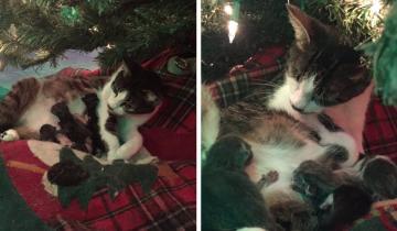 Наверное, это самый лучший подарок, который можно найти  под новогодней елкой