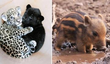 25 детёнышей диких животных, которых хочется потискать!