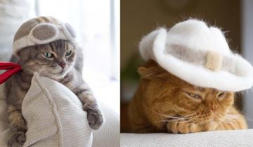 Японский фотограф нашел самое правильное применение кошачьей шерсти!