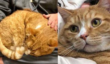 Кот был вне себя от горя: его сдали в приют из-за любви посидеть на коленях хозяев