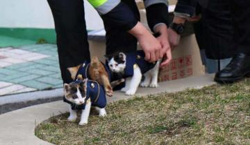 История о том, как в Южной Корее появилась первая семья кошек-полицейских