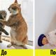 20 лайфхаков, которые облегчат жизнь владельцам кошек