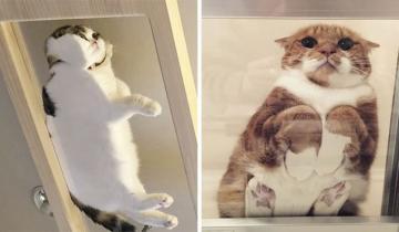 17 причин, почему у всех кошатников должен быть стол с прозрачной столешницей