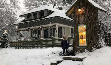 Женщина сделала из 110-летнего сухого дерева маленькую библиотеку!