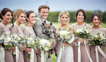 Поросенок-фотобомбер: микропиг «испортил» всю свадебную фотосессию