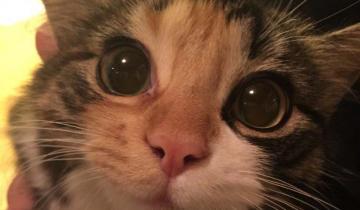 12 необычных причин, почему стоит завести себе котеночка
