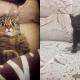 15 смешных фото, которые показывают всю суть кошачьего бытия