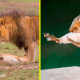 25 фото дикой природы, которые стали самыми смешными  в 2018 году