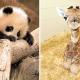 12 умилительных детенышей животных, глядя на которых вы не сможете сдержать улыбку