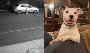 История брошенного пса разрушила миллионы сердец. Но у нее оказался счастливый финал!