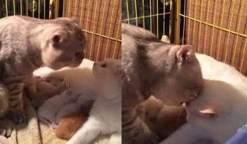 Папа-кот впервые видит своих новорожденных котят. Трогательная реакция!