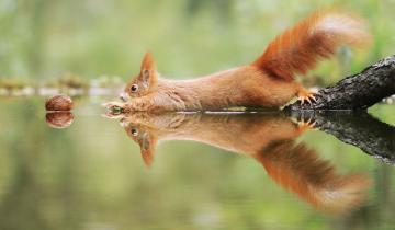 20 веселых фото дикой природы от австрийского фотографа Джулиана Рада