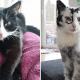 Девушка нашла на ферме двух черно-белых кошек и забрала их себе. Через время одна из них начала белеть