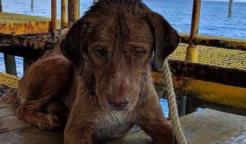 Буровики чудом спасли собаку из моря в 200 км от берега