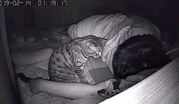 При помощи скрытой камеры хозяин раскрыл коварный ночной план его кота