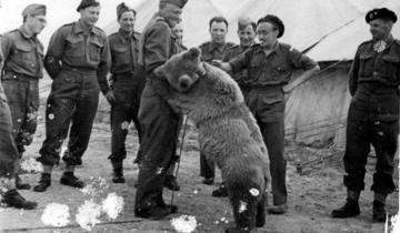 Капрал Войтек: история о медведе-герое, который воевал во Второй Мировой