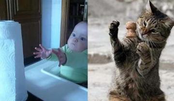 Телекинез и левитация — это легко! Даже кошки и младенцы могут!