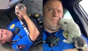 Котята очень не хотели расставаться с тем, кто их спас