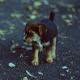 Девушка подобрала беспризорного щеночка, не подозревая, что ей грозит